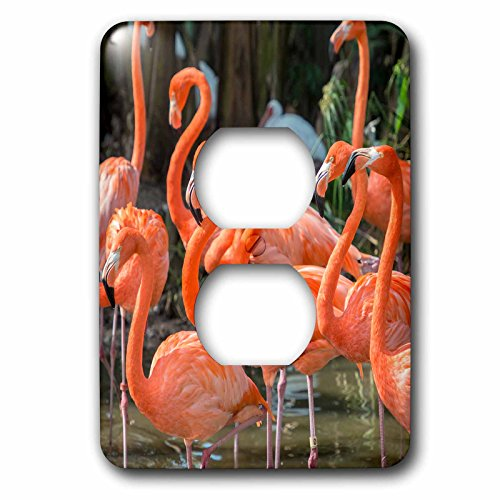 3dRose lsp_207217_6 Usa, Florida, Orlando. Pink Flamingos At Gatorland. - 2 Plug Outlet - Orlando At Outlets