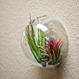Wall Terrarium Globe 6 Inch (Plants Not Included)