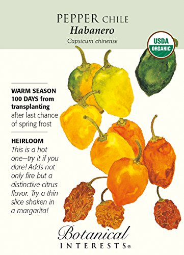 Habanero Chile Pepper - 30 Seeds - Organ - Habanero Chile Shopping Results