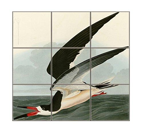 Black Skimmer (Audubon) Square Tile Mural Satin Finish 18