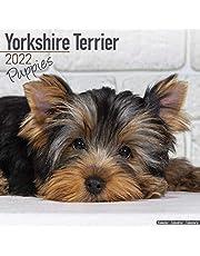 Yorkshire Terrier Puppies - Yorkshire Terrier Welpen 2022 - 16-Monatskalender: Original Avonside-Kalender [Mehrsprachig] [Kalender]: Original BrownTrout-Kalender [Mehrsprachig] [Kalender]