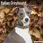 Italian Greyhound Calendar - Dog Bree...
