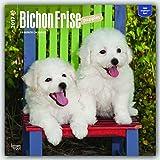 Bichon Frise Puppies 2017 Square