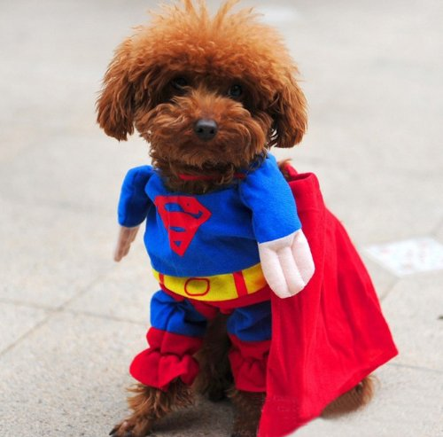 DELICOL Cute Superman Pet Costume Superhero Dog Cat (L)
