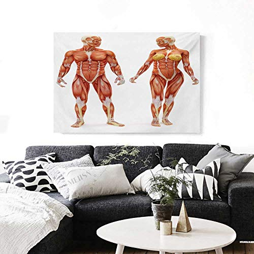 BlountDecor Human Anatomy Modern Canvas Painting Wall Art Male and Female Bodies with Inner Mass Build Display Muscle System Graphic Print Art Stickers 24