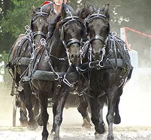 Arnés Zilco ZGB con 4 caballos – caballo, Z Grip con arrêtoirs ...