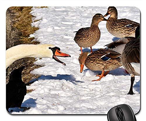 cks Canada Goose Wild Goose Water Bird ()