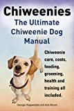 Chiweenies. Chiweenie Dog Manual. Chiweenie care, costs, feeding, grooming, health and training all included.