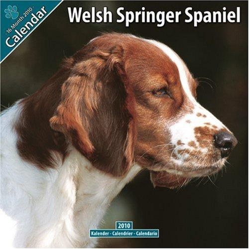 Welsh Springer Spaniel 2010 Wall Calendar