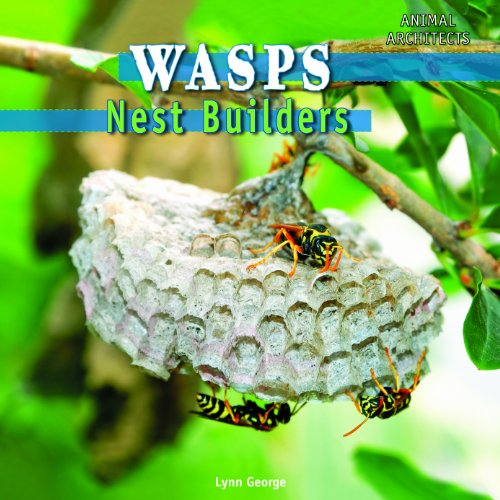 Wasps: Nest Builders (Animal Architects) (Nest Builder)