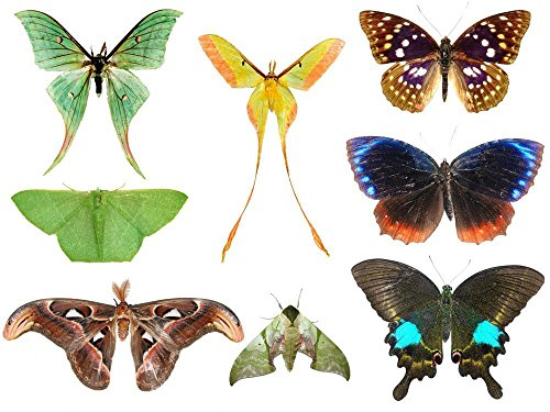 wallmonkeys-wm265798-butterfly-moth-collection-peel-and-stick-wall-decals-12-in-w-x-9-in-h