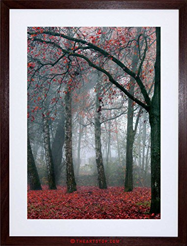 NATURE FOREST AUTUMN BEAUTIFUL F12X4210 product image