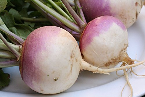 Purple Top White Globe Turnip 25 Seeds-GARDEN FRESH!