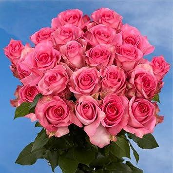 amazon com globalrose 75 fresh cut pink roses long stem