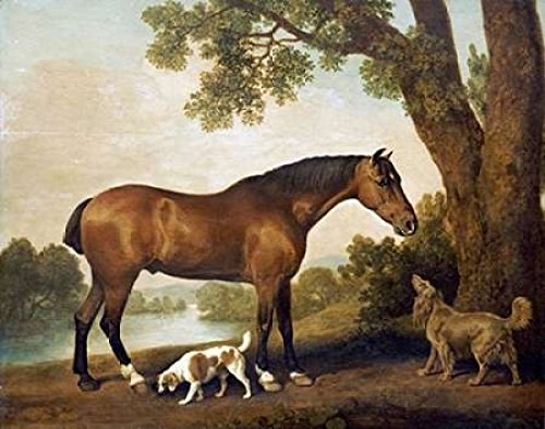 (A Bay Hunter a Springer Spaniel and a Sussex Spaniel 1782 Poster Print by George Stubbs (11 x 14))
