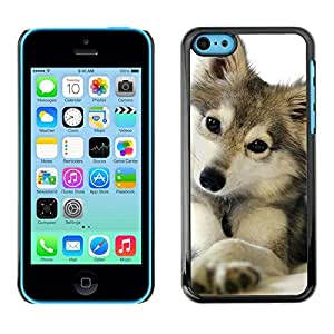 FlareStar Colour Printing Cute Puppy Wolf Snow Winter Pet Canine cáscara Funda Case Caso de plástico para Apple iPhone 5C