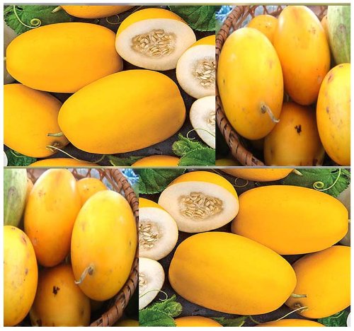 5 VINE PEACH Melons Seeds ~~TASTE JUST LIKE MANGO & GREAT FOR MAKING PIES -
