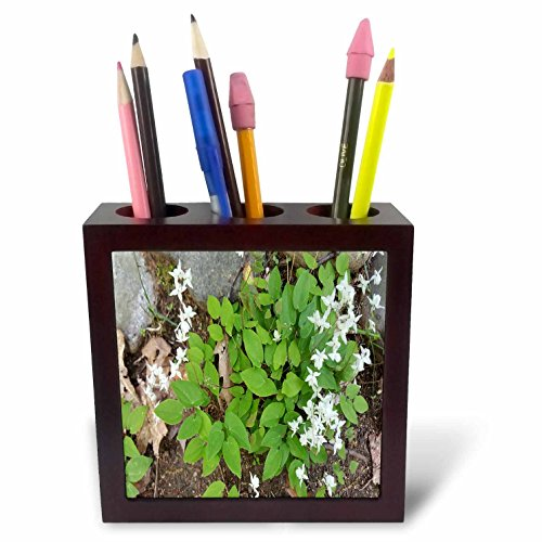 Little 5 Flowers (3dRose TDSwhite – Summer Seasonal Nature Photos - Surprise Little White Flowers - 5 inch Tile Pen Holder (ph_284572_1))