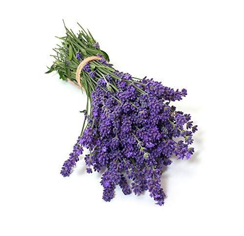 (David's Garden Seeds Herb Lavender Munstead Type SL9432 (Purple) 200 Non-GMO, Heirloom, Seeds)