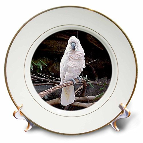 Birds - Moluccan Cockatoo - 8 inch Porcelain Plate (cp_834_1)