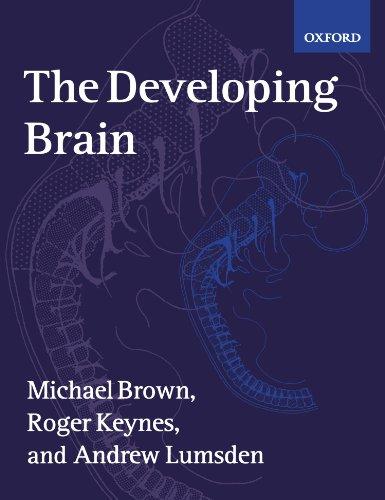 developing brain - 9