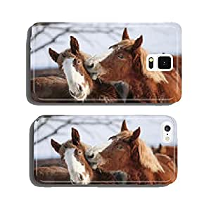 Horse kiss cell phone cover case iPhone5
