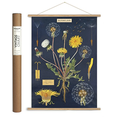 Cavallini Papers & Co. Cavallini Vintage Dandelion Hanging Poster Kit -