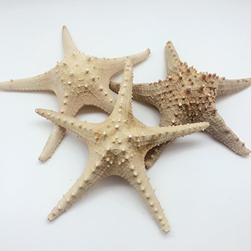 PEPPERLONELY Large Natural Horned Starfish (Protoeaster Linckii), 10 Inch ~ 12 Inch