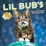 Lil Bub 2019 Wall Calendar