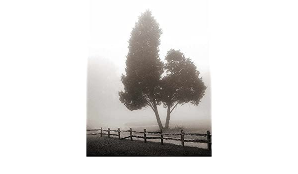 Nicholas Bell Cedar Tree and Fence Photography Landscape Fog Print Poster 16x20