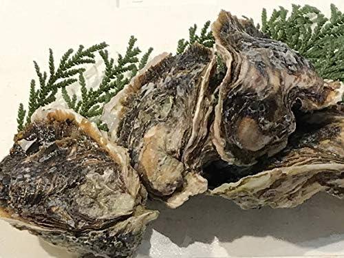 島根県産 岩がき(生食用)300~350g 1個