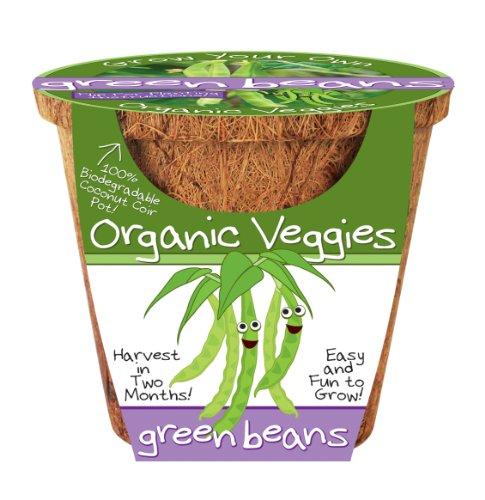 Dunecraft Green Beans Science Kit