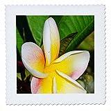 3dRose Danita Delimont - Flowers - Frangipani flower close up, Kauai, Hawaii. - 20x20 inch quilt square (qs_259219_8)