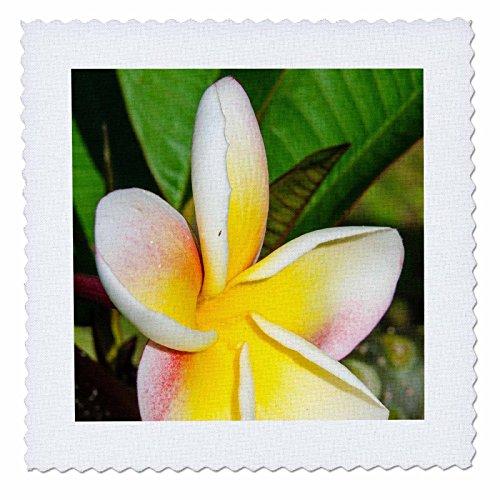 3dRose Danita Delimont - Flowers - Frangipani flower close up, Kauai, Hawaii. - 20x20 inch quilt square (qs_259219_8) by 3dRose