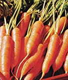 Little Finger Carrot 200 Seeds #8135 Item Upc#650348691714