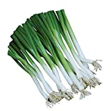 buy Burpee Parade Scallion Onion Seeds 1500 seeds now, new 2019-2018 bestseller, review and Photo, best price $7.69