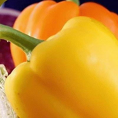 Everwilde Farms - Organic Golden California Wonder Sweet Pepper Seeds - Gold Vault