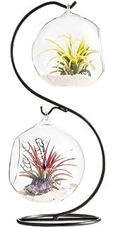 Mkouo - Terrario aéreo para plantas, colgador de plantas, globo contenedor de plantas,