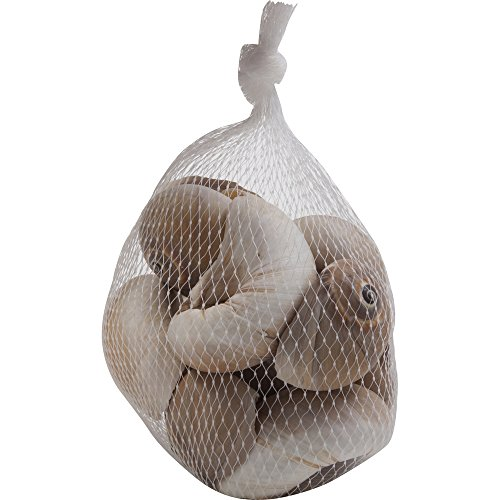 Sea shells mixed beach seashells bag of over 200 seashells for Bag of seashells for crafts