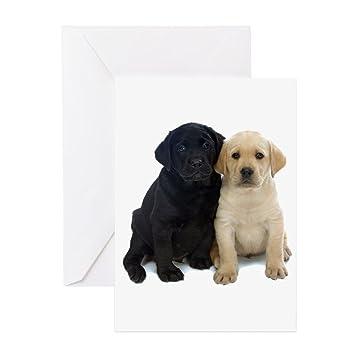 Amazon Cafepress Black And White Labrador Puppies