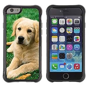 Jordan Colourful Shop@ Labrador Retriever Golden Dog Puppy Rugged hybrid Protection Impact Case Cover For iPhone 6 Plus CASE Cover ,iphone 6 5.5 case,iPhone 6 Plus cover ,Cases for iPhone 6 Plus 5.5