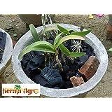 Orchid Charcoal Kerala Agro Organics (350)