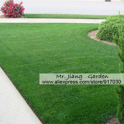 Semilla de pasto azul de Kentucky * 1 paquete (100 semillas) * Semillas de césped de hierba * Jardín * Semillas de césped verde *: Amazon.es: Jardín