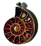 Raven Blackwood Imports Men's Pendant Ammonite Fossil Shell Steampunk Extinct Marine Creature Unique