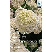 HYDRANGEA PANICULATA: For the Beginner Gardener