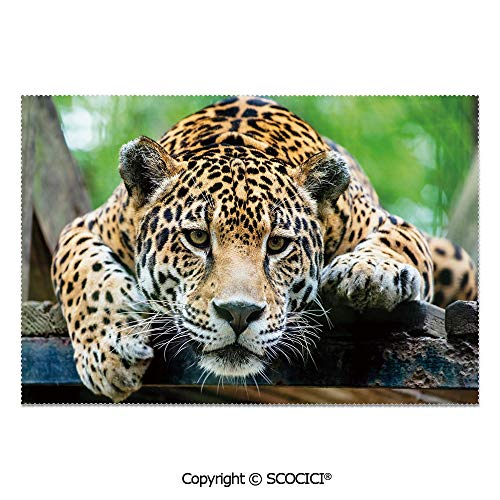 (SCOCICI Place Mats Set of 6 Personalized Printed Non-Slip Table Mats South American Jaguar Wild Animal Carnivore Endangered Feline Safari Image for Dining Room Kitchen Table Decor)