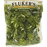 Fluker's Repta Vines-Pothos