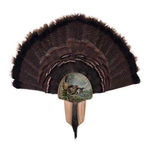 Walnut Hollow Country Turkey Fan Mount & Display Kit, Oak with Double Strike ()