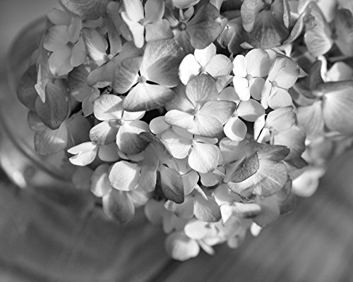 Hydrangea flower wall art black and white photography large wall decor picture floral