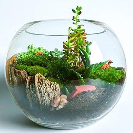 Concretelab Co Handmade Clear Glass Globe Bowl Open Terrarium Kit